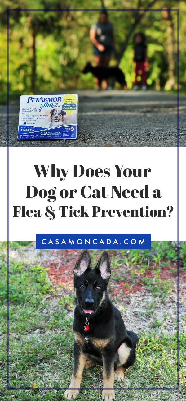 Why does your dog or cat need a flea and tick prevention