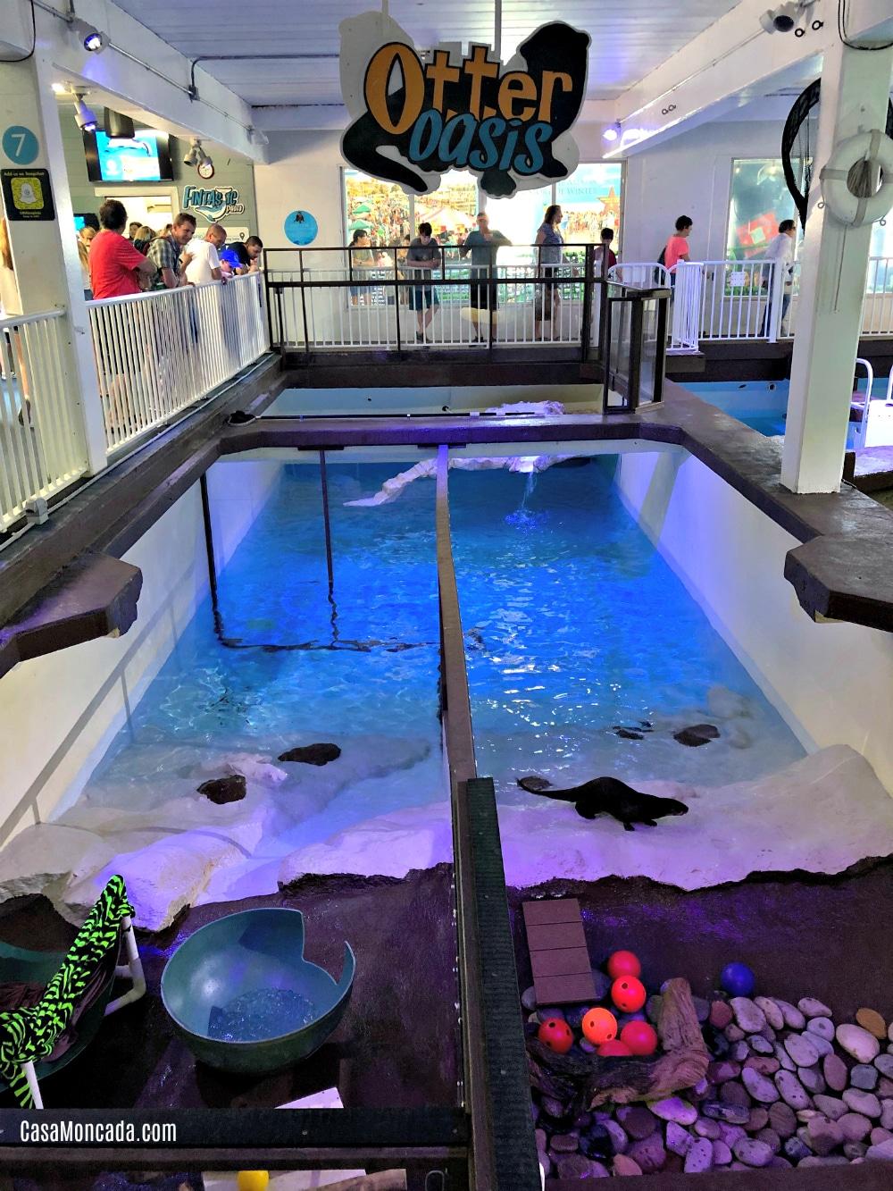 Otter Oasis Marine Aquarium