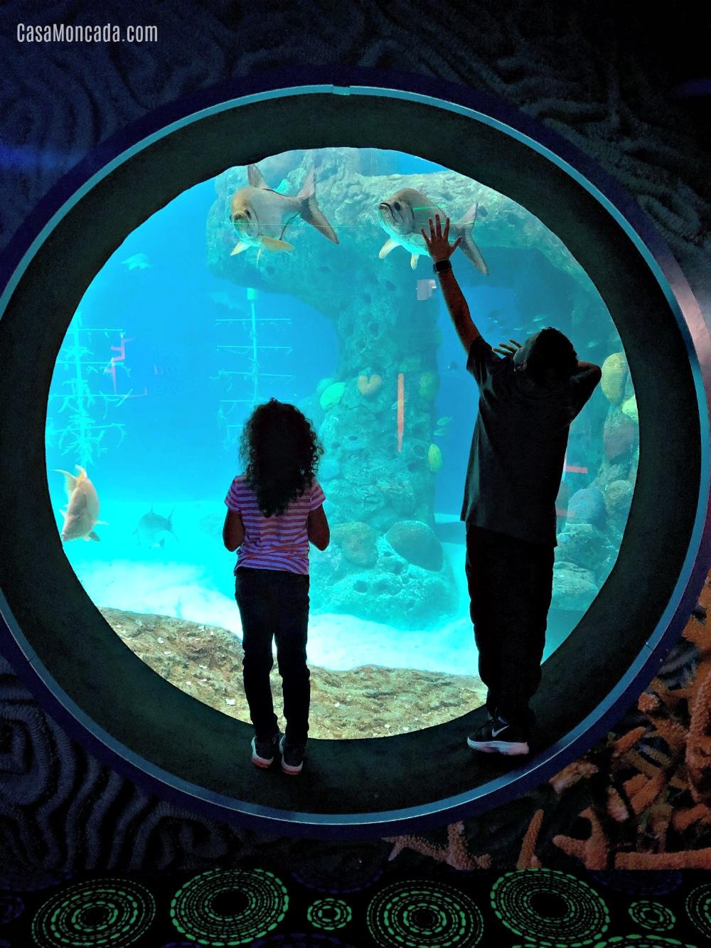 The Florida Aquarium tank